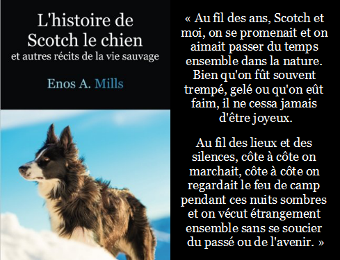 Citation de Scotch le chien