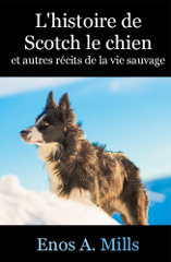 Scotch le chien Coverbook